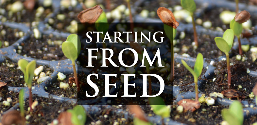 How to Germinate Native Seeds