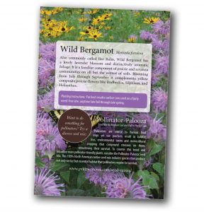 Wild Bergamot - Monarda fistulosa free seed packet (back) from Prairie Moon Nursery