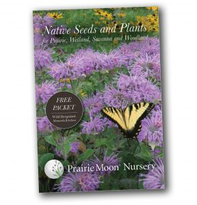 Wild Bergamot - Monarda fistulosa free seed packet (front) from Prairie Moon Nursery