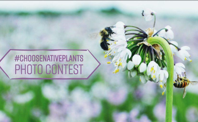#ChooseNativePlants Photo Contest – Win $100