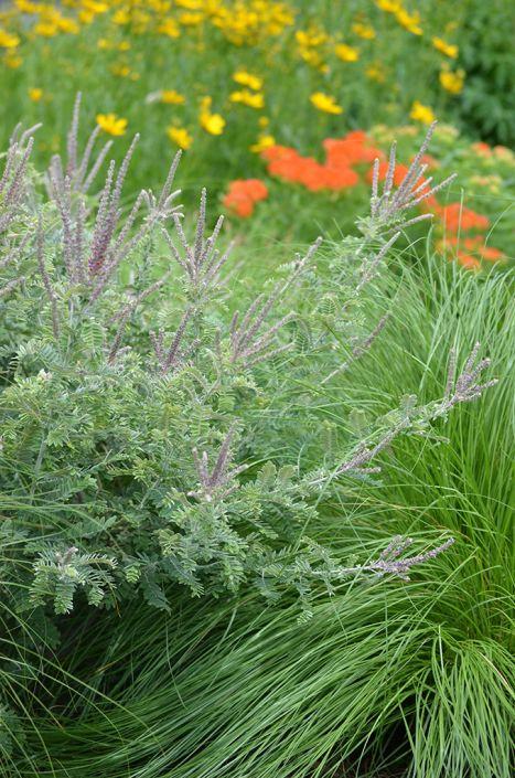 Butterfly and Hummingbird Garden Kit for drier soils | Prairie Moon ...