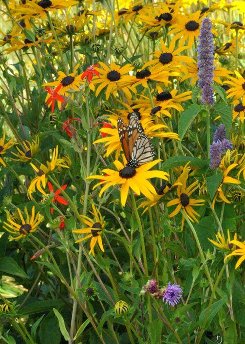 Butterfly And Hummingbird Garden   For Drier Soils