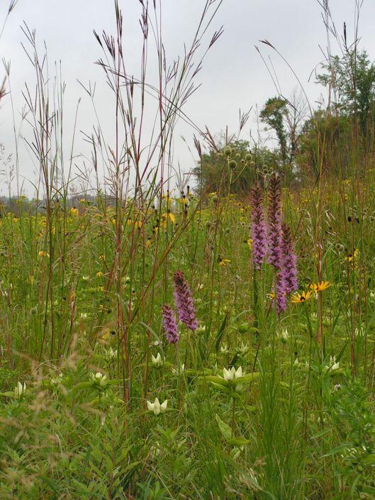 Classic Tallgrass Prairie Garden