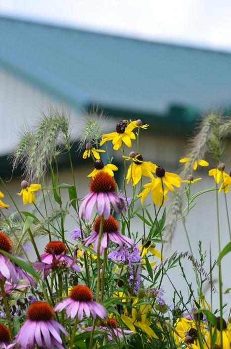 Pollinator Palooza Seed Mix