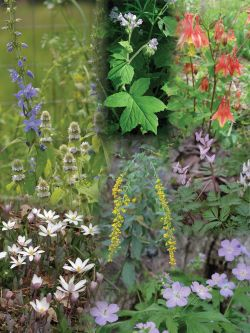 seed mix enhancement for a shady woodland